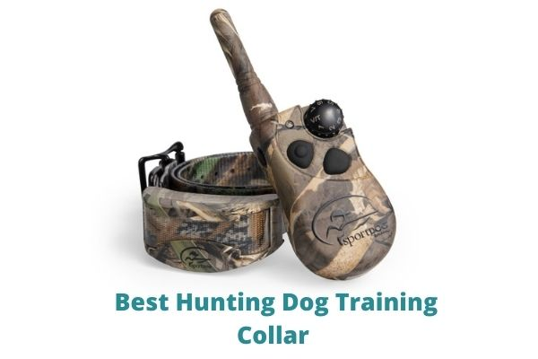 Best Hunting Dog Training Collar